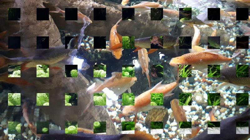СМОТРИМ И БОГАТЕЕМ Рыбки символ богатства и достатка