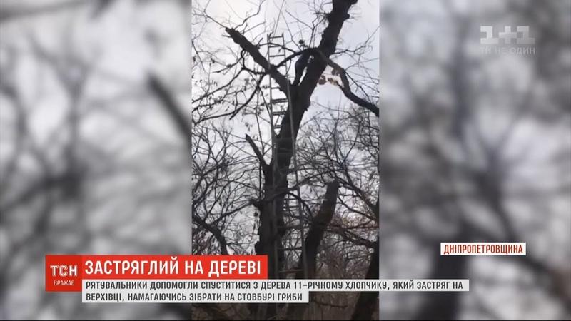 Збирав на стовбурі гриби: юнака на Дніпропетровщині рятувальники знімали з дерева