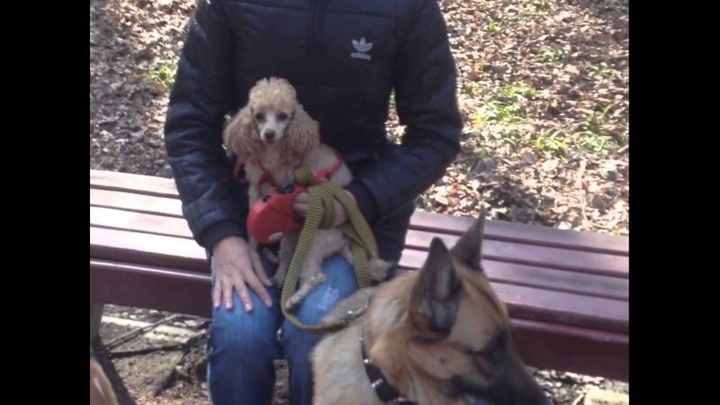 Мужчинам которые боятся собак Татарка ФМ
