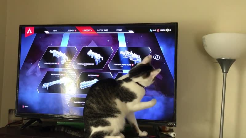 You can use Apex as a cat toy.