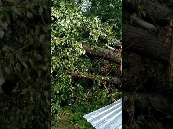 Упавшее дерево едва не разрушило жилой дом на улице Шухова в Туле