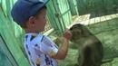 Гуляем в контактном зоопарке и кормим животных