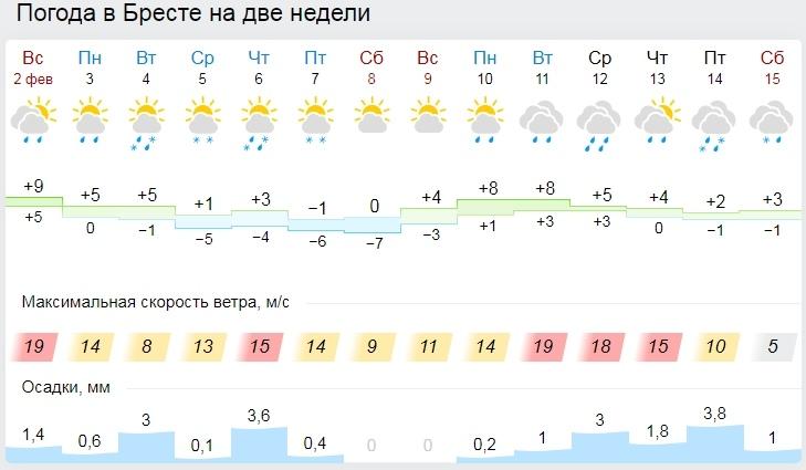В Бресте 1 февраля воздух прогрелся до 10,3 градуса тепла. Так тепло было только в 2002 году