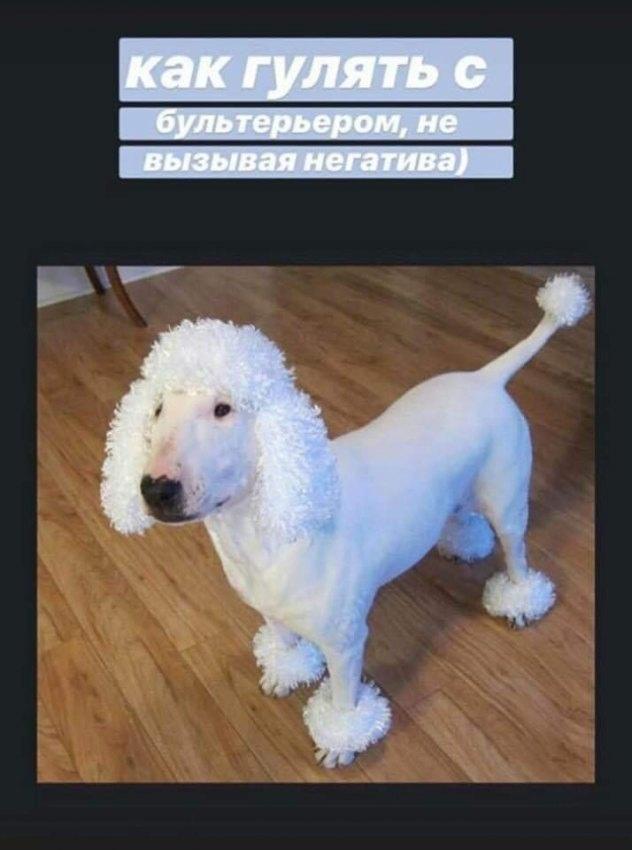 Лайфхак для собачников