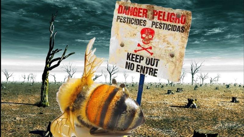 Вымирание пчел и насекомых ускорилось экологическая катастрофа