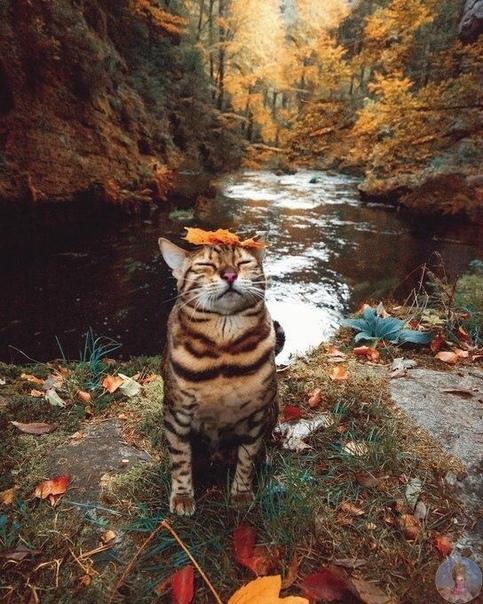 Кошка путешественница Sui the cat