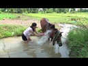 Fantastic! Lonely Girl Learn Give special Food to A Horse How to Wash and Care A Horse's