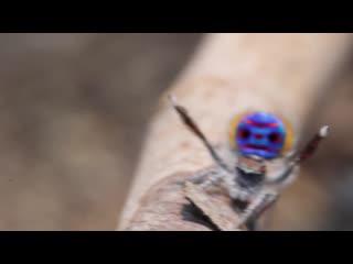 Рубрика Животные мудрости. Будь как паук!