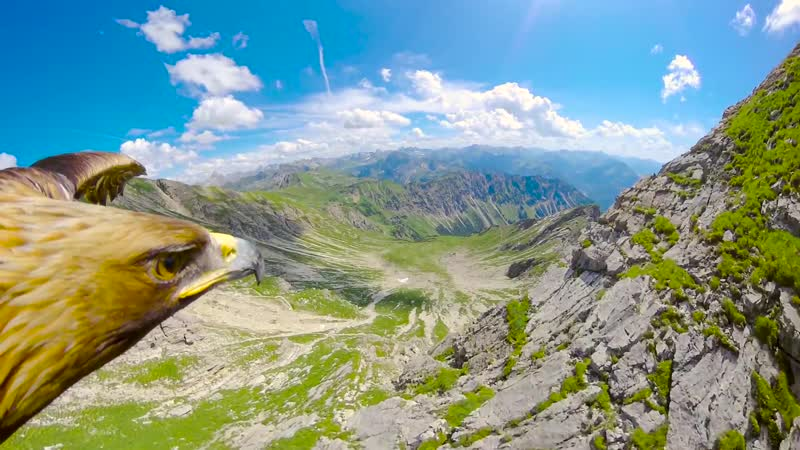 Eagle Flying Over The Alps