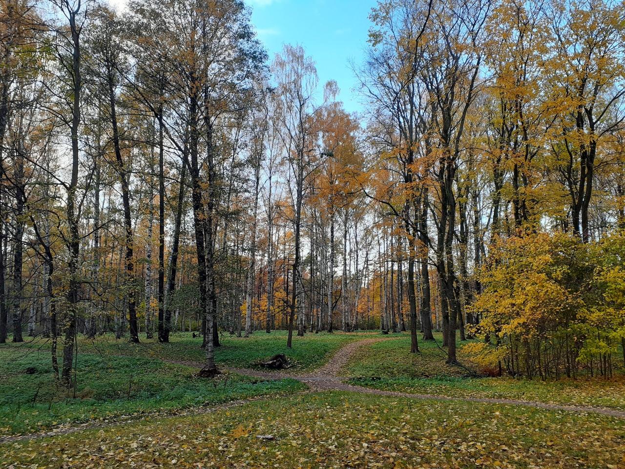 Середина октября в Удельном парке. Изумительная красота середины осени. 4 фото.
