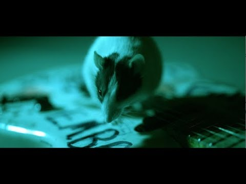 Alice In Chains Never Fade Official Video