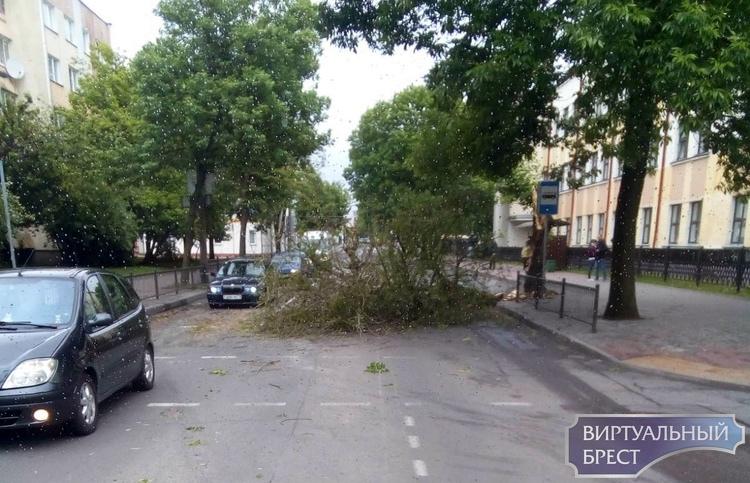 На Пушкинской в Бресте рухнуло дерево, движение было ограничено