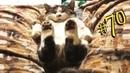ПРИКОЛЫ С ЖИВОТНЫМИ 😺🐶 Смешные Животные Собаки Смешные Коты Приколы с котами Забавные Животные 70