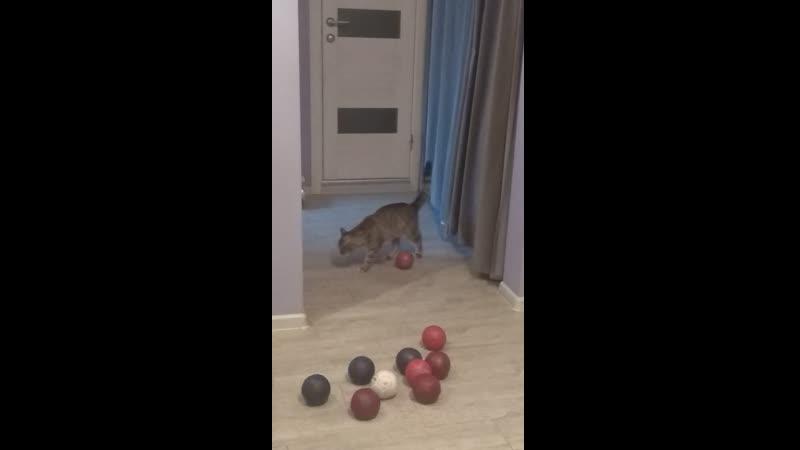Кошка и бочча