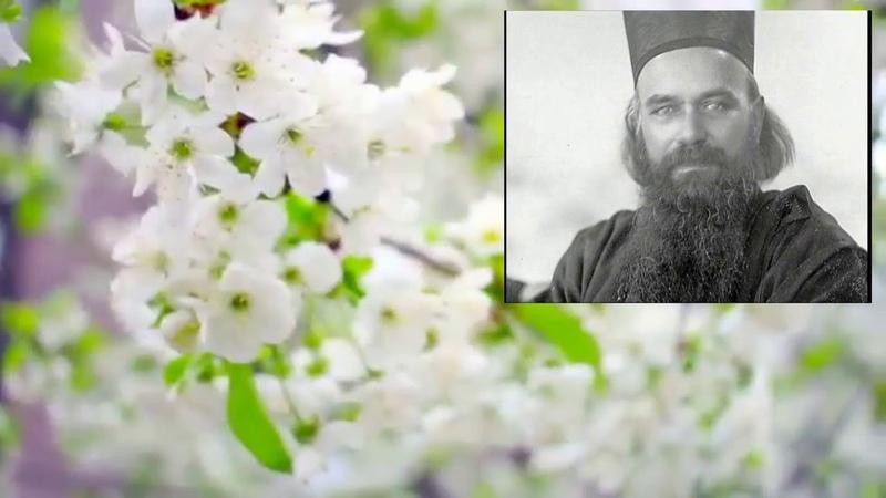 Святитель Николай Сербский Письмо отцу который всюду искал исцеления для сына