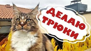 Трюки кошки Анфисы