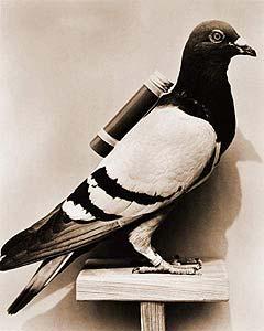 «Летите, голуби, летите…», изображение №2