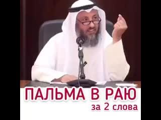 Шейх Усман аль Хамис -  Пальма в Раю.mp4