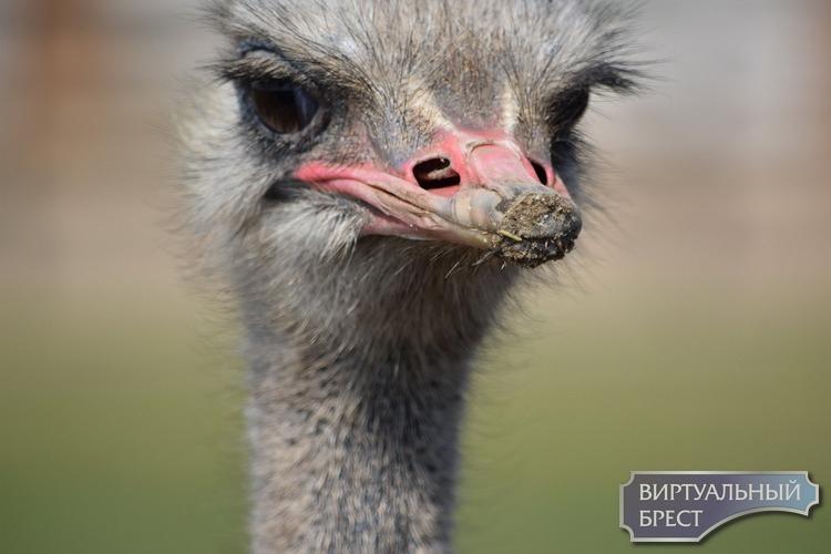 А ты поздравил птичек? За этим коронавирусом забыли о празднике пернатых
