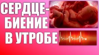 СЕРДЦЕ ПЛОДА ВО ВРЕМЯ БЕРЕМЕННОСТИ   Как бьется сердце малыша в утробе матери