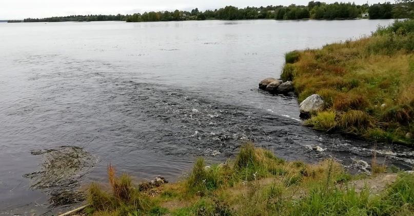 В устье реки Вохтозерка. Фото Н. Калинкиной