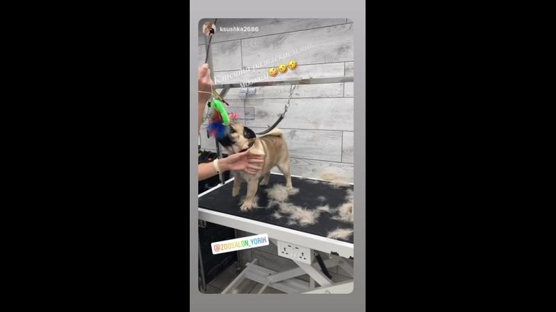 Видео от Ульяны Горшковой