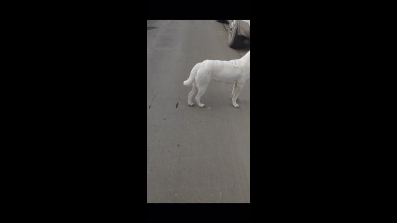 Видео от Передержки для животных г Гусь Хрустальный