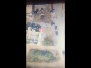 """Атака смертников ИГ* на """"шахид-мобилях"""" на иракский военных в районе Мосула, Ирак_05"""