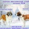 """""""Любимый друг"""" московская сторожевая и компания"""
