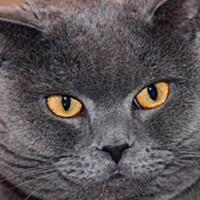 Фотография профиля Ильи Арифова ВКонтакте
