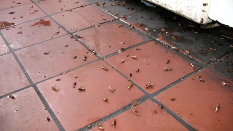 Как избавиться от тараканов? МАСТЕР-ДЕЗИНФЕКТОР:+79852771542
