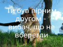 Троцюк Наталя   Мукачево   15