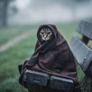 Фотоальбом Марии Гареевой