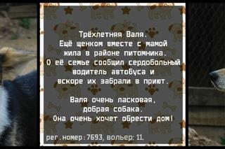 """Собаки приюта """"Надежда"""" ищут свой дом"""
