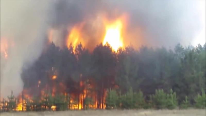 ЛигаЮныхПожарных Искорка Социальный видеоролик призывающий общество обратить внимание на проблему лесных пожаров
