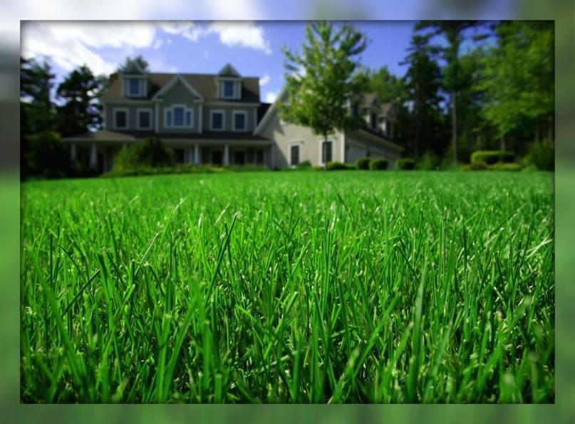 7 веских причин посеять газон на Вашем участке, изображение №2