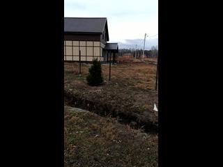 Высадили елочки на центральной улице