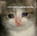 Фотоальбом Софьи Шмагиной