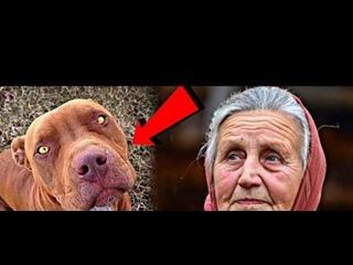 Бабушка приютила у себя взрослого Бойцовский питбуля, которого хозяева бросили в лесу. А спустя время пёс...