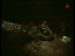Потерялся слон (1984)