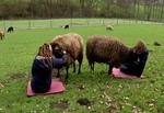 Немецкая ферма предлагает людям, которые чувствуют себя 56360