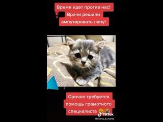 Лиза Заикина   Офгруппа гения и легенды 21 века kullanıcısından video