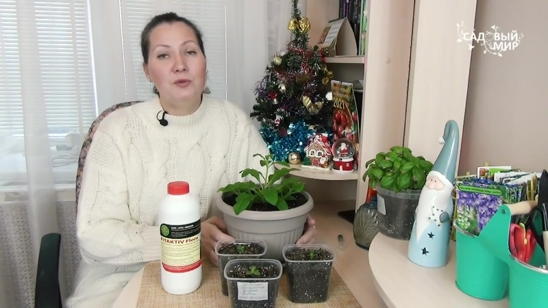Прожорливые петунии Чем подкормить цветы с длительным сроком вегетации