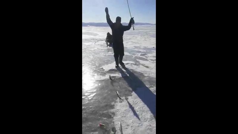 Байкальский Омуль 5 шт за раз