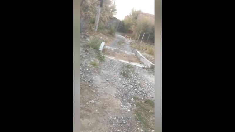 Видео от Црка Хакасии