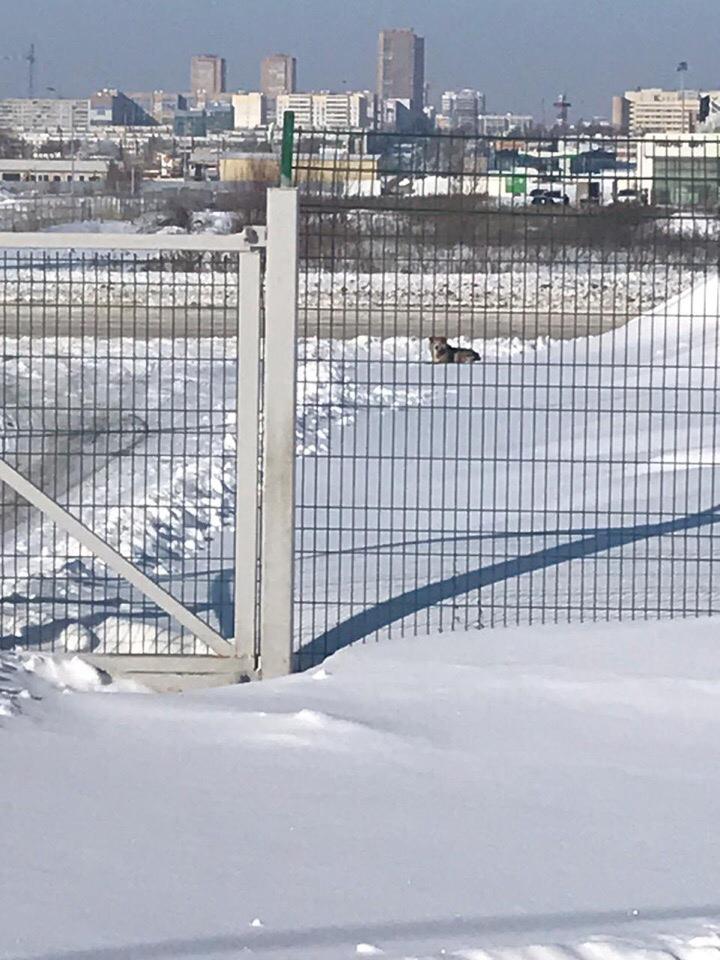 Сбили собаку Новый город Хлебный проезд  д 7 ООО