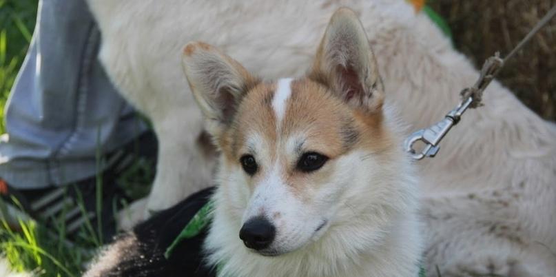 Женщина с собакой спасла несовершеннолетнюю омичку от педофила-рецидивиста