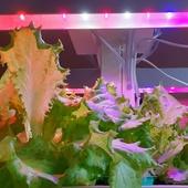 Комплект для выращивания рассады