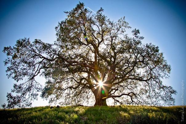 Мы себе не отдаем отчета, большей частью в том, что мы, выходя из сна, вступаем в совершенно новый, небывалый день