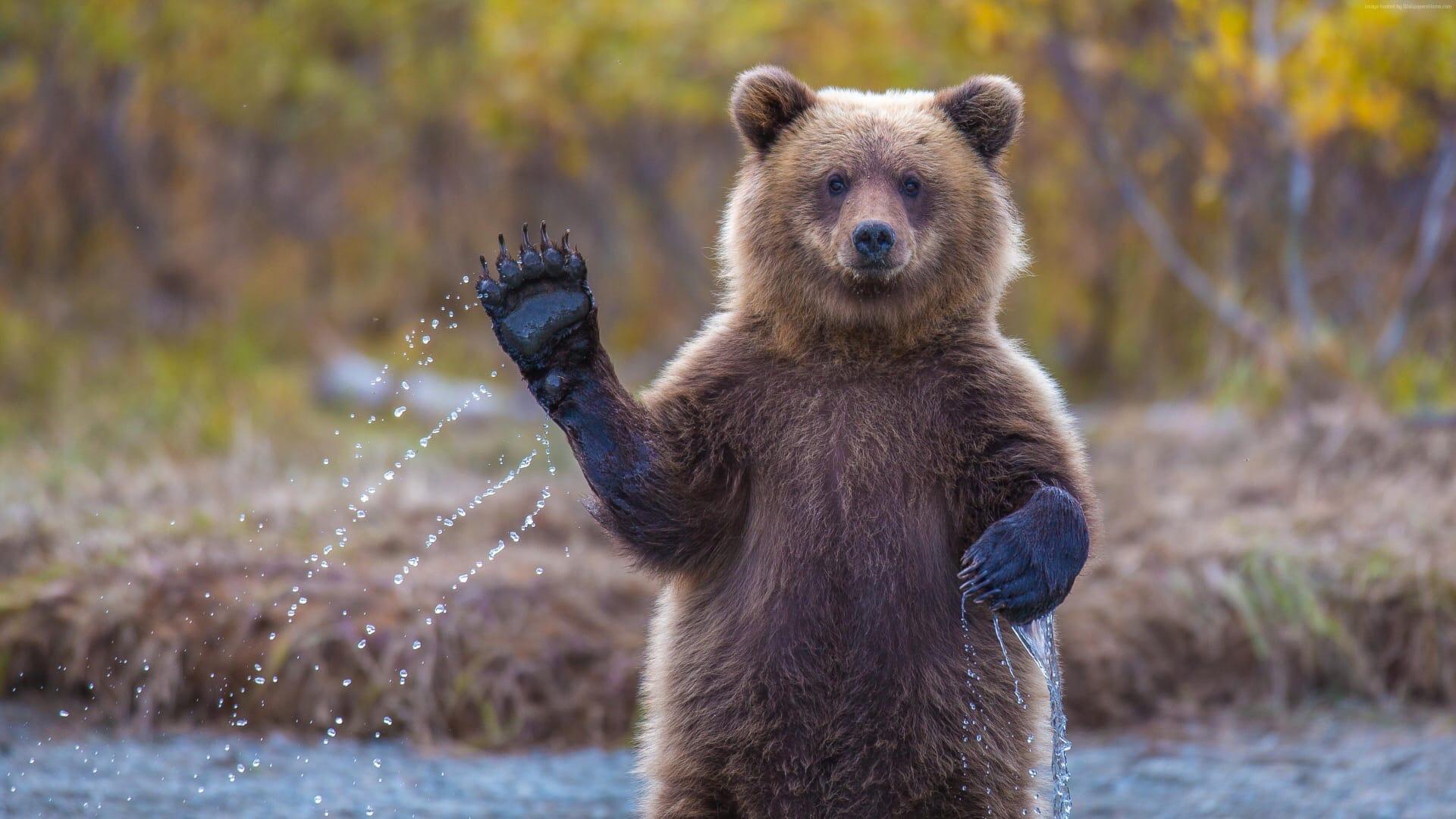 В Удмуртии снова заметили медведяЖивотное появилось вблизи
